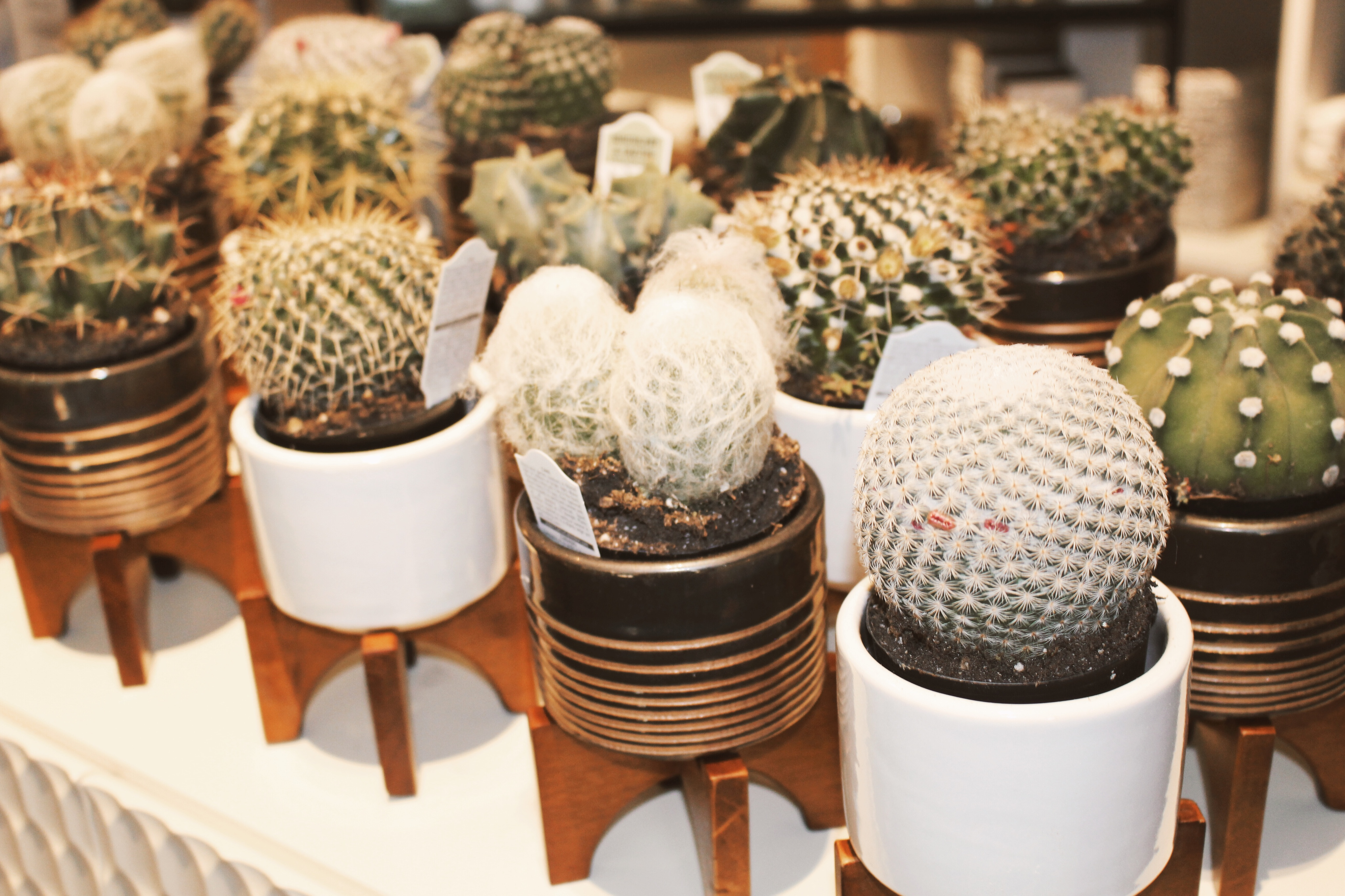 Holiday Gifts Downtown Summerlin